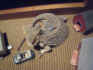 04-09-09 lizard 054