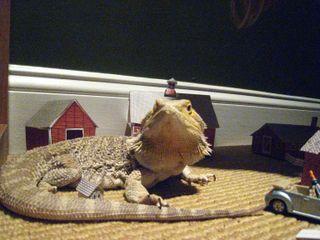 04-09-09 lizard 057